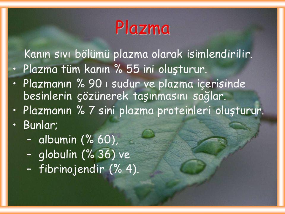 Plazma Kanın sıvı bölümü plazma olarak isimlendirilir.
