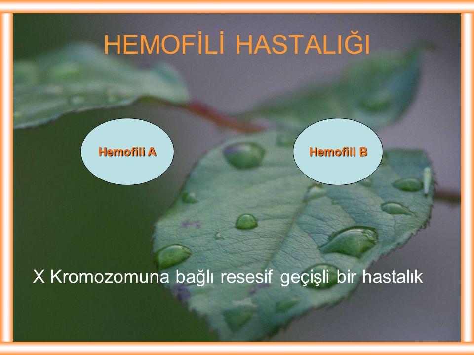 HEMOFİLİ HASTALIĞI X Kromozomuna bağlı resesif geçişli bir hastalık