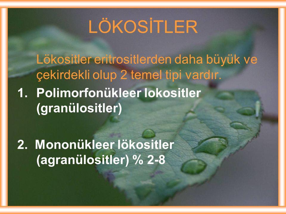 LÖKOSİTLER Lökositler eritrositlerden daha büyük ve çekirdekli olup 2 temel tipi vardır. Polimorfonükleer lokositler (granülositler)