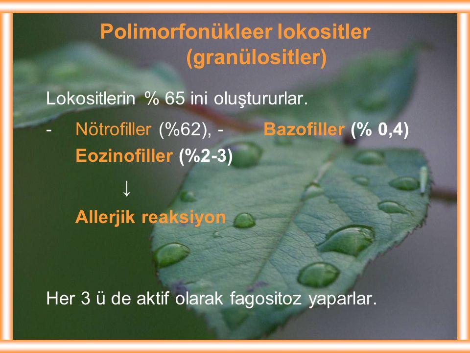 Polimorfonükleer lokositler (granülositler)