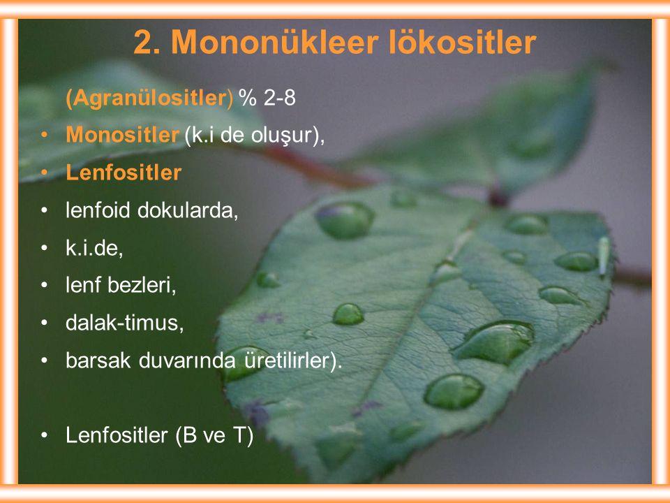 2. Mononükleer lökositler