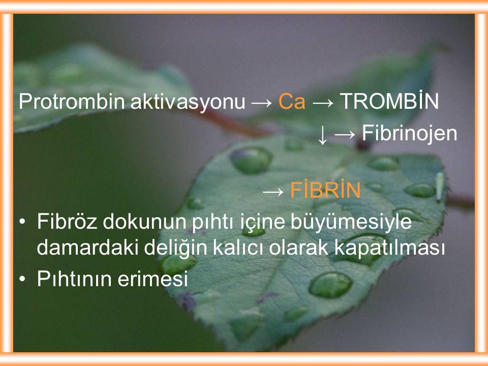 Protrombin aktivasyonu → Ca → TROMBİN