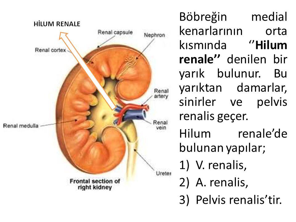 Hilum renale'de bulunan yapılar; V. renalis, A. renalis,