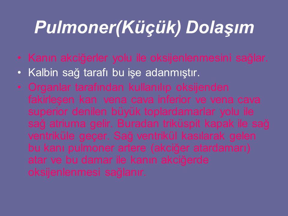 Pulmoner(Küçük) Dolaşım