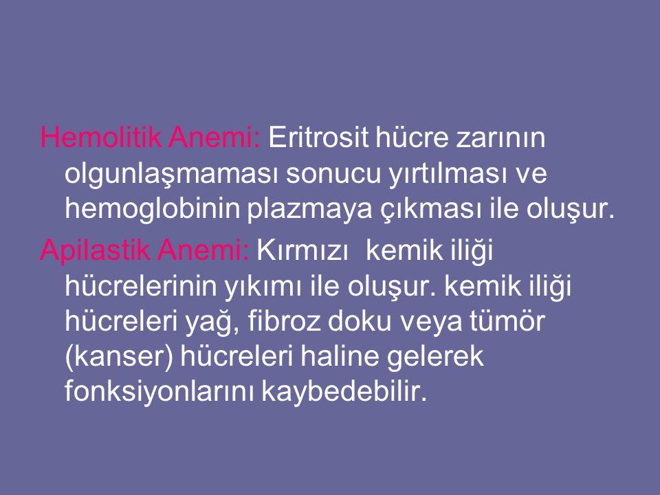 Hemolitik Anemi: Eritrosit hücre zarının olgunlaşmaması sonucu yırtılması ve hemoglobinin plazmaya çıkması ile oluşur.