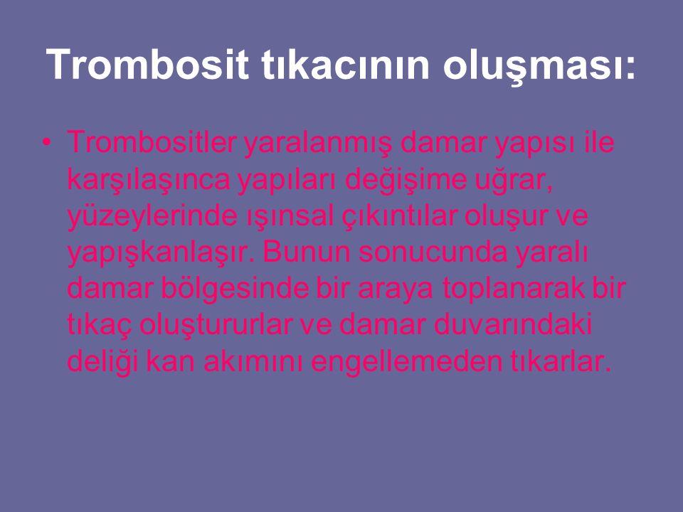 Trombosit tıkacının oluşması: