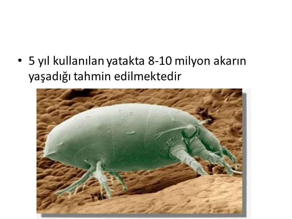 5 yıl kullanılan yatakta 8-10 milyon akarın yaşadığı tahmin edilmektedir