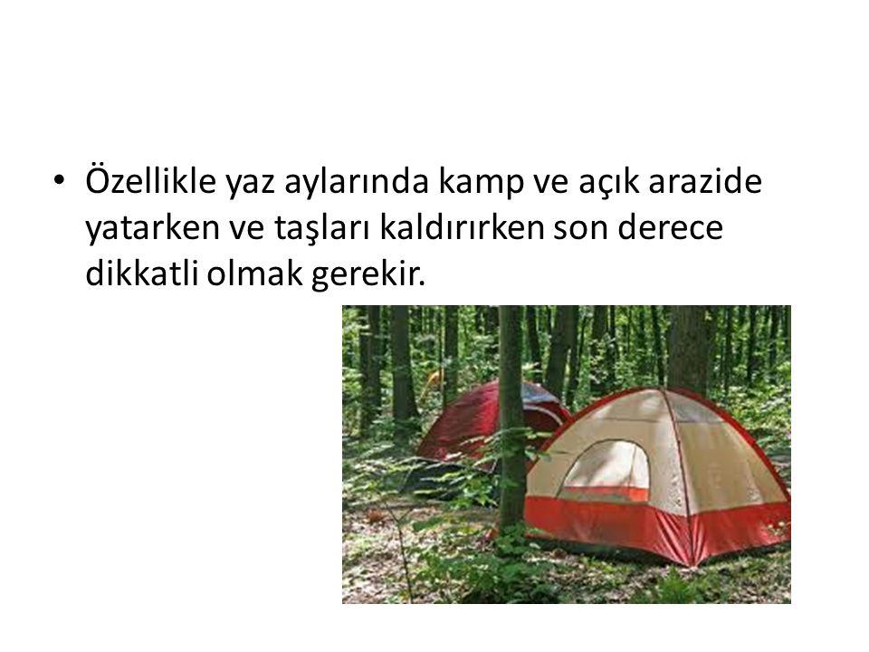 Özellikle yaz aylarında kamp ve açık arazide yatarken ve taşları kaldırırken son derece dikkatli olmak gerekir.
