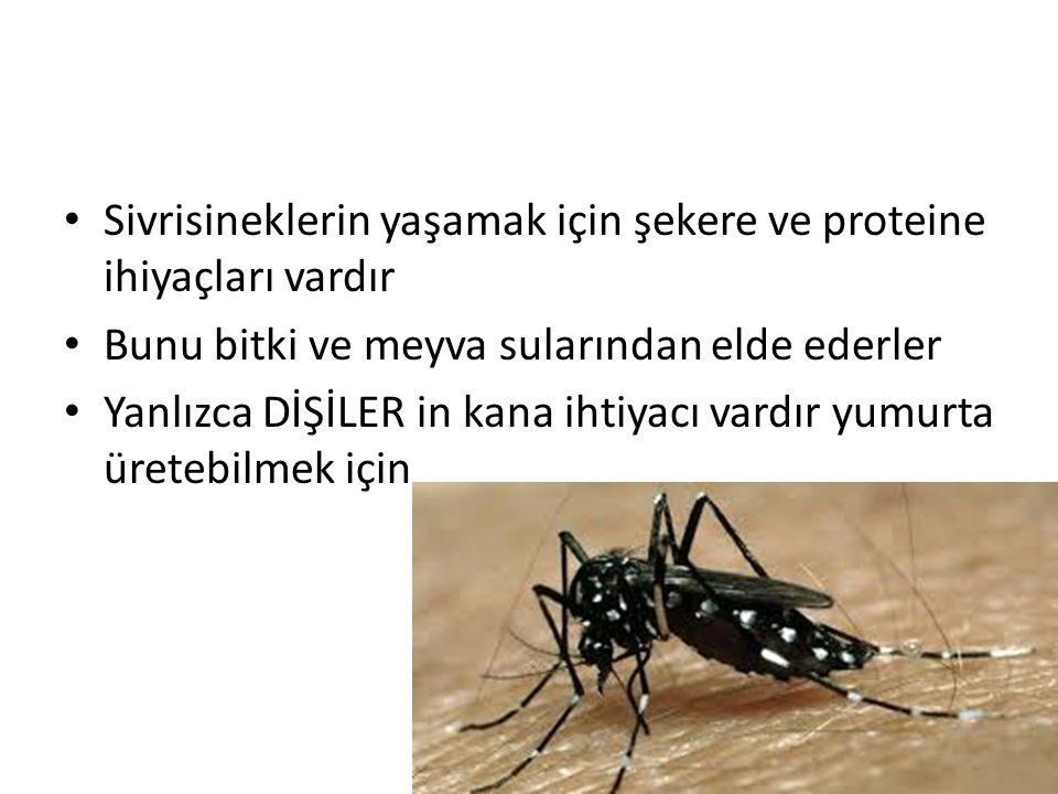 Sivrisineklerin yaşamak için şekere ve proteine ihiyaçları vardır