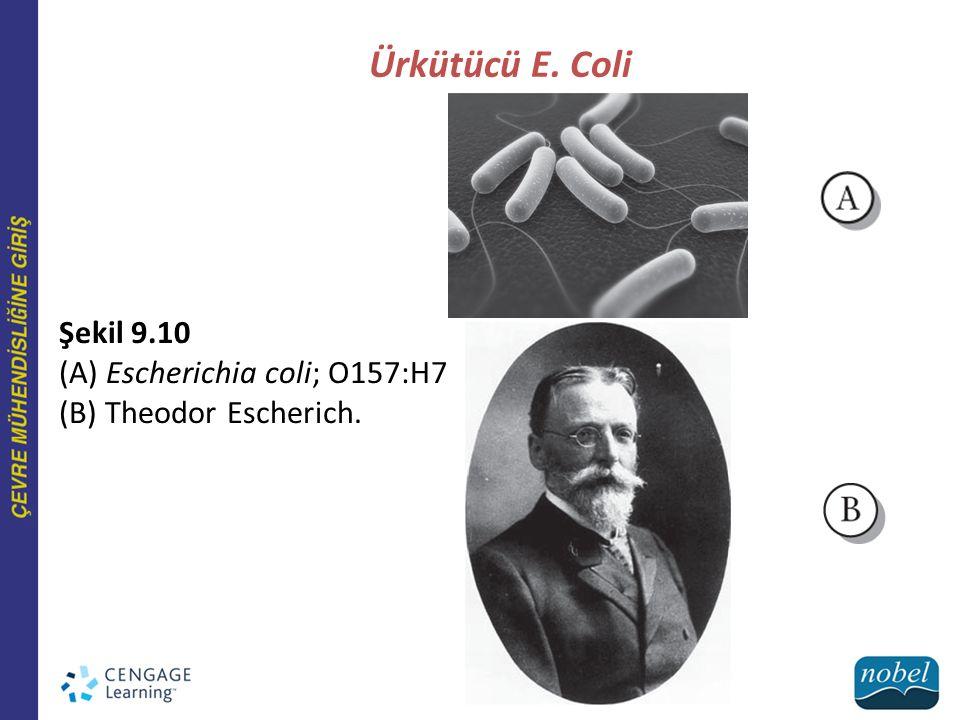 Ürkütücü E. Coli Şekil 9.10 (A) Escherichia coli; O157:H7