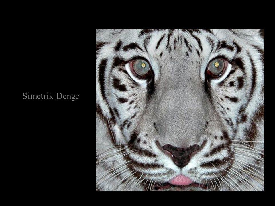 Simetrik Denge