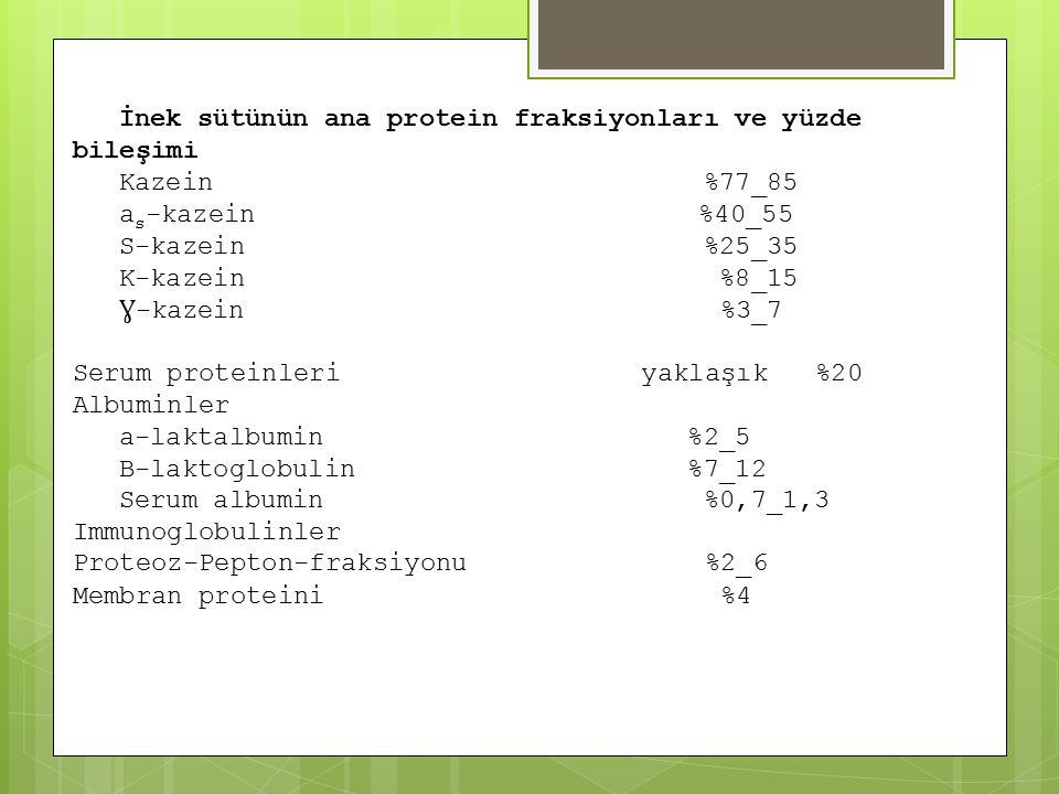 İnek sütünün ana protein fraksiyonları ve yüzde bileşimi