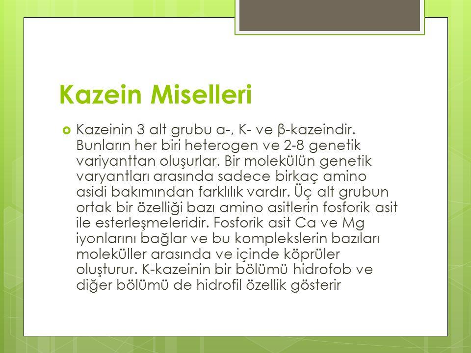 Kazein Miselleri
