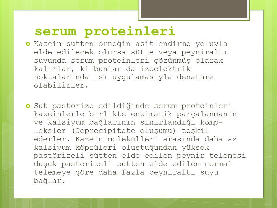 serum proteinleri