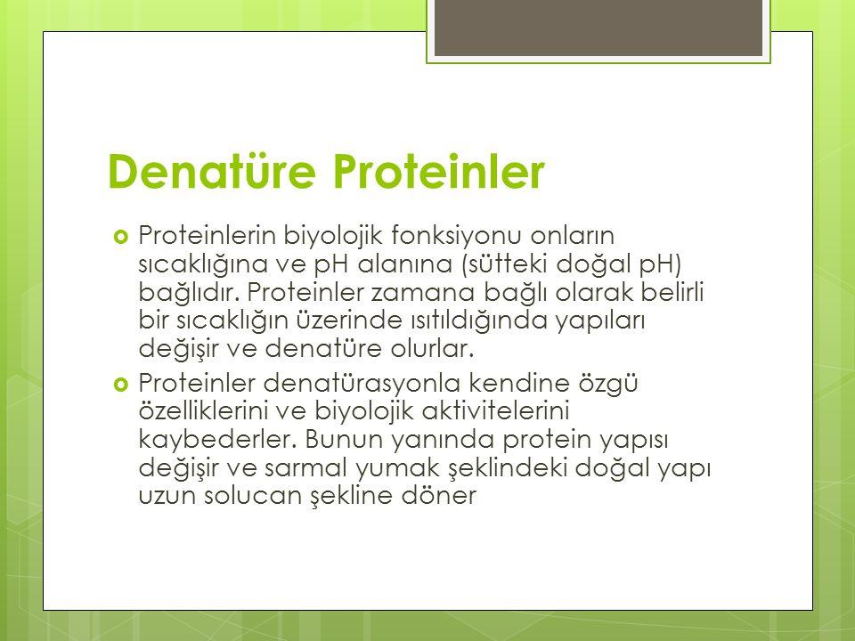 Denatüre Proteinler
