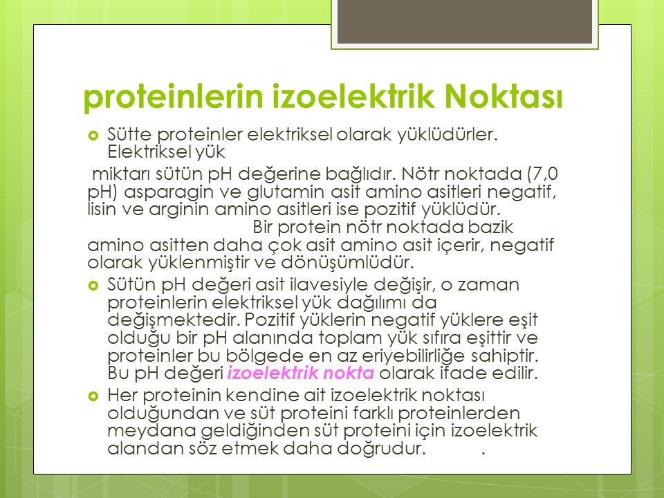 proteinlerin izoelektrik Noktası