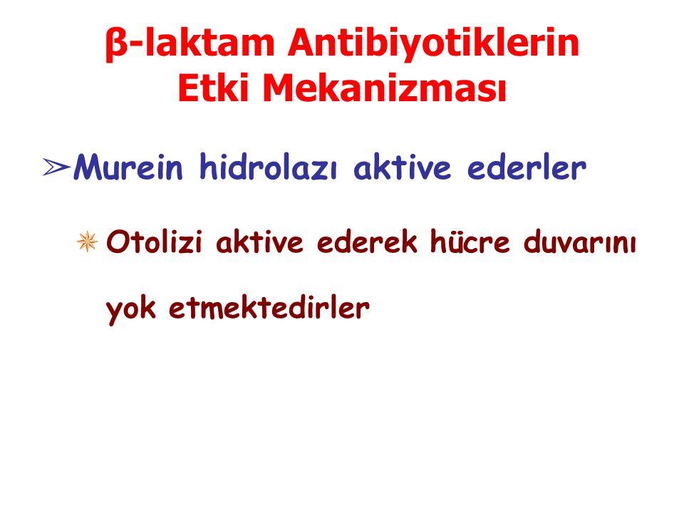 β-laktam Antibiyotiklerin Etki Mekanizması