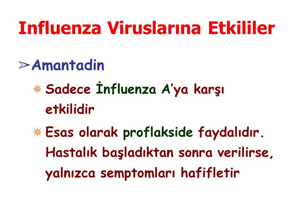 Influenza Viruslarına Etkililer