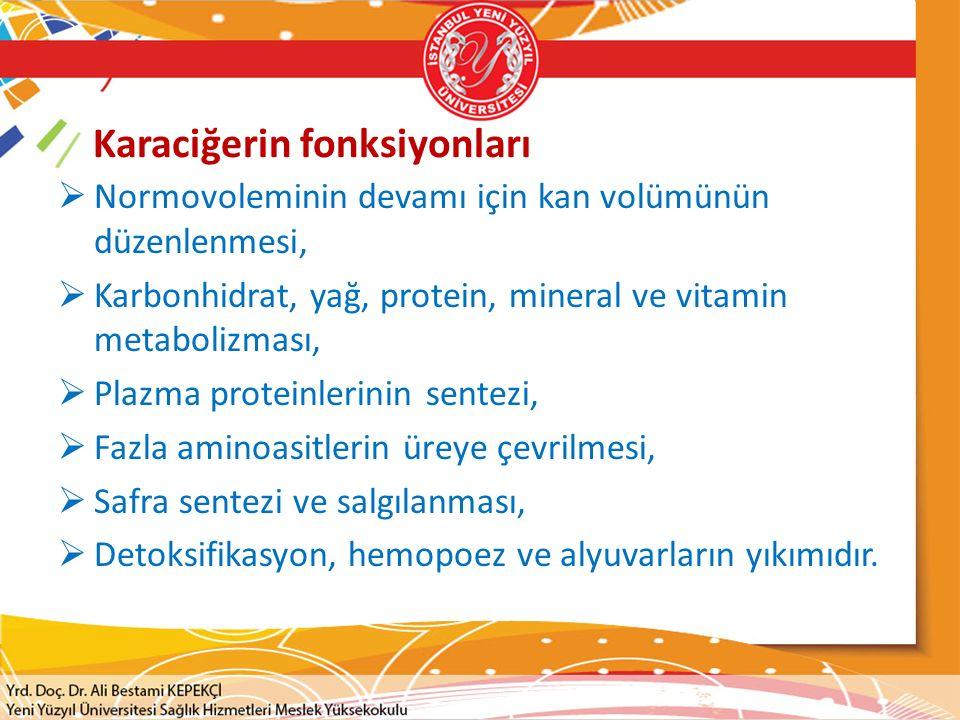 Karaciğerin fonksiyonları