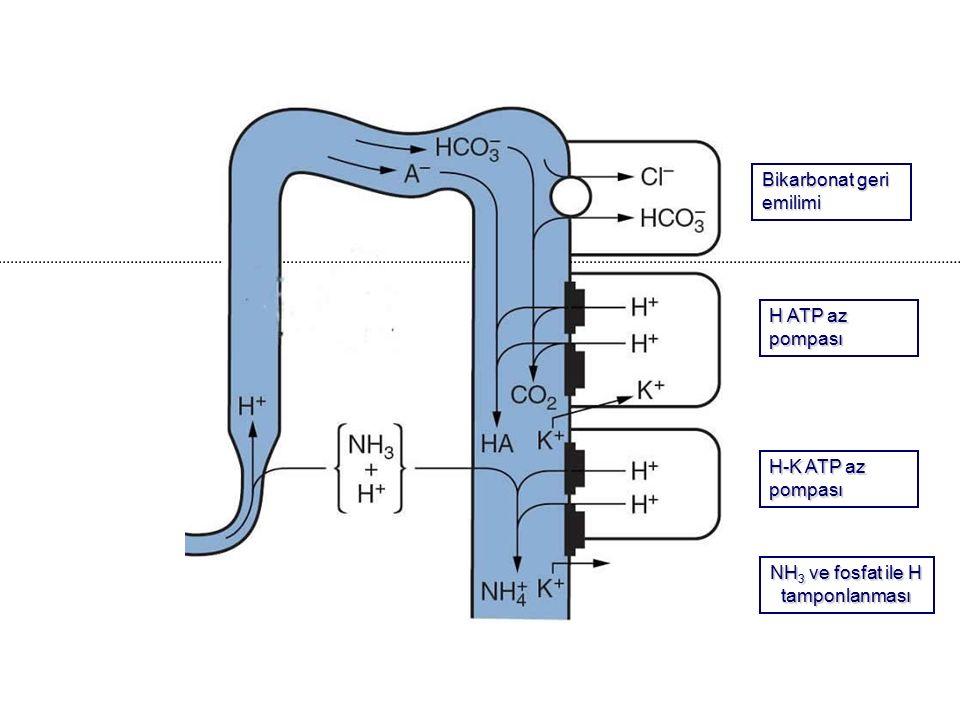 NH3 ve fosfat ile H tamponlanması
