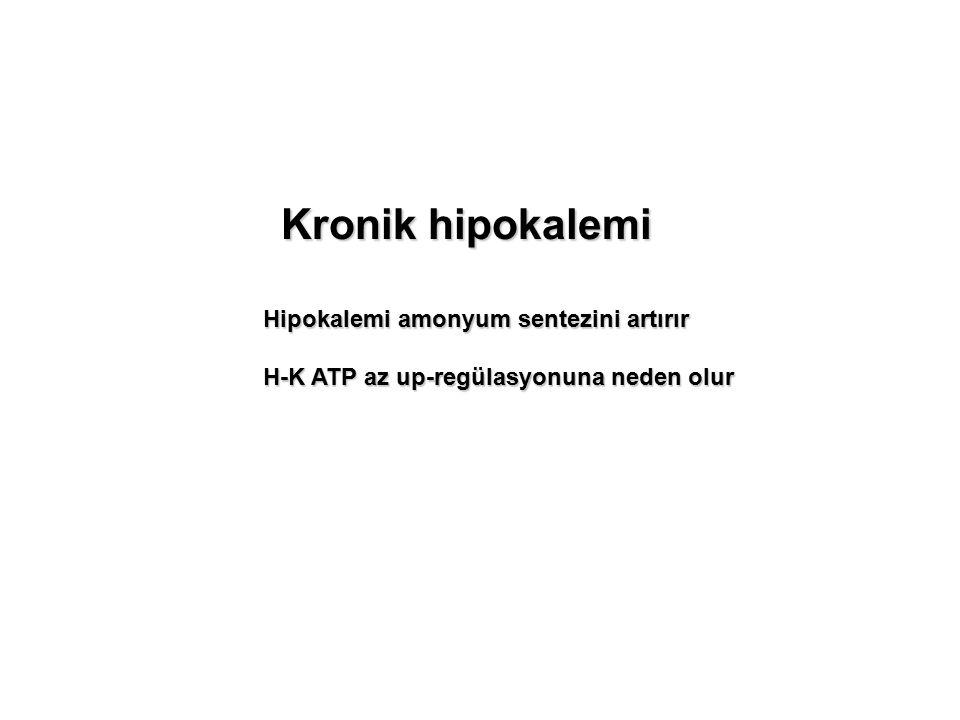 Kronik hipokalemi Hipokalemi amonyum sentezini artırır