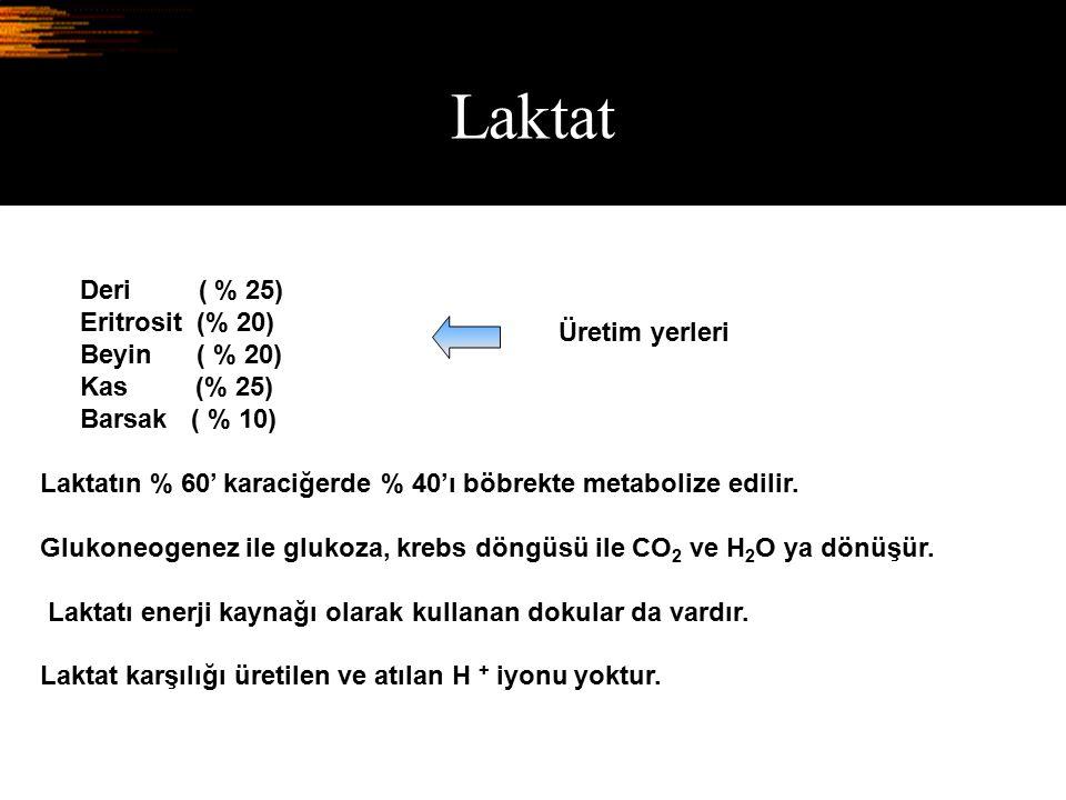 Laktat Deri ( % 25) Eritrosit (% 20) Beyin ( % 20) Üretim yerleri