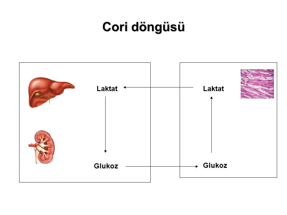 Cori döngüsü Laktat Laktat Glukoz Glukoz