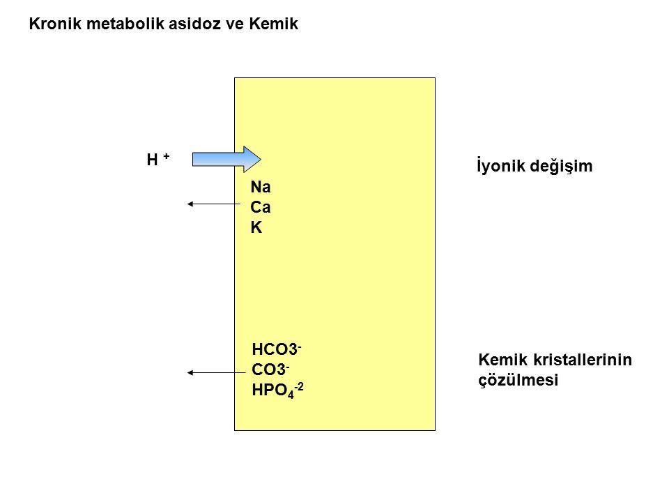 Kronik metabolik asidoz ve Kemik