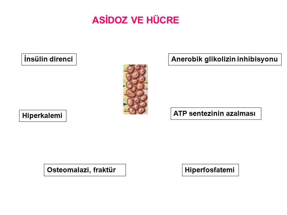 ASİDOZ VE HÜCRE İnsülin direnci Anerobik glikolizin inhibisyonu