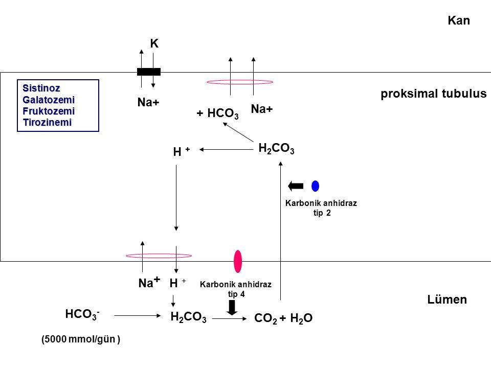 Kan K proksimal tubulus Na+ Na+ + HCO3 H2CO3 H + + Na H + Lümen HCO3-