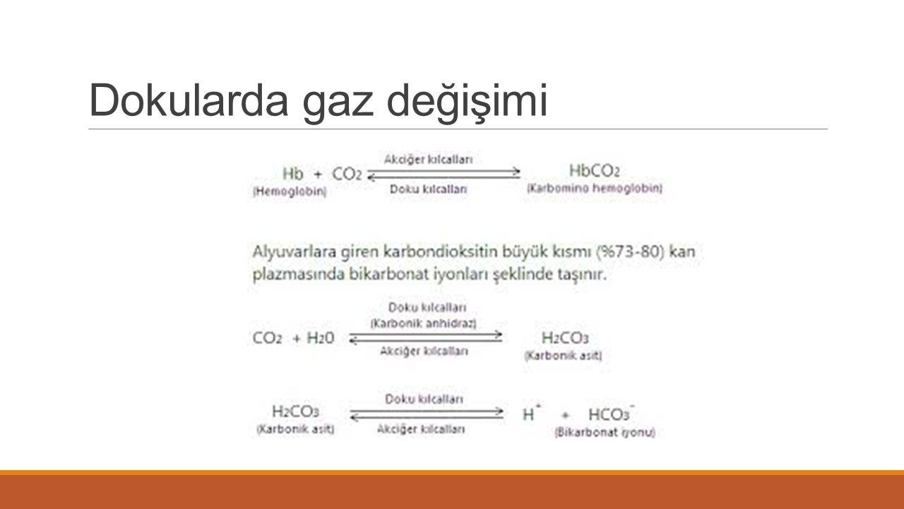 Dokularda gaz değişimi