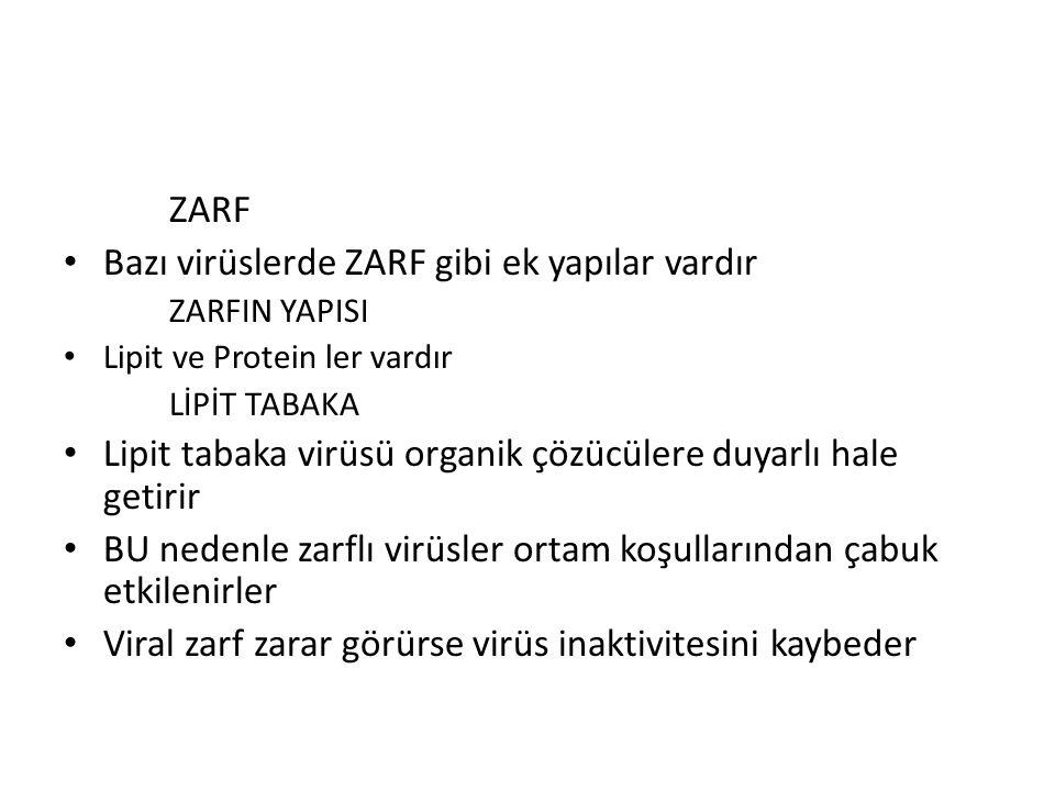 Bazı virüslerde ZARF gibi ek yapılar vardır