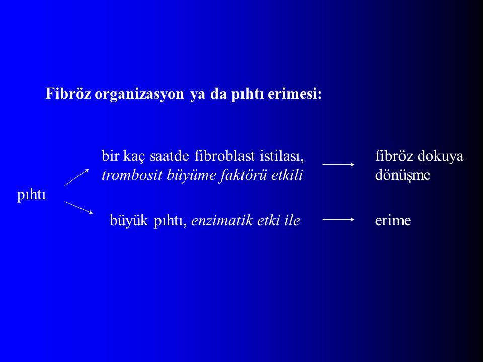Fibröz organizasyon ya da pıhtı erimesi: