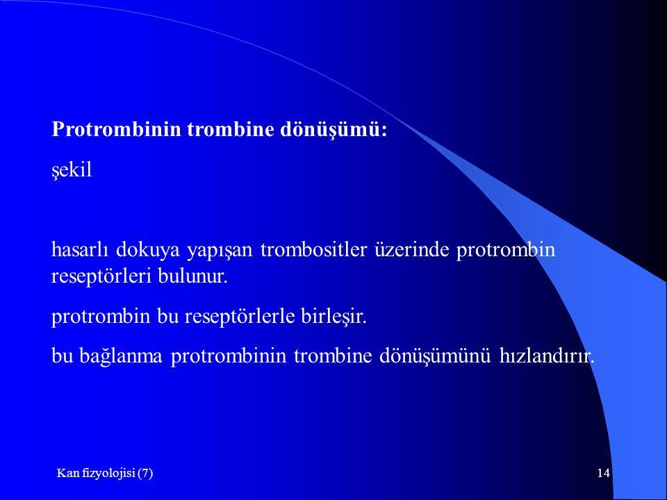 Protrombinin trombine dönüşümü: şekil