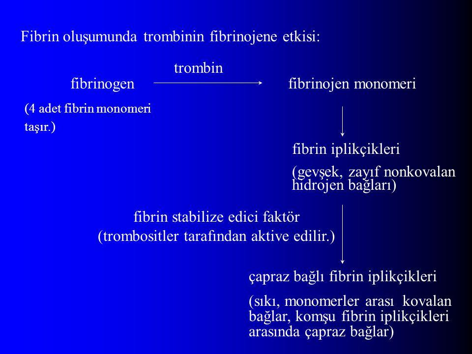 Fibrin oluşumunda trombinin fibrinojene etkisi: