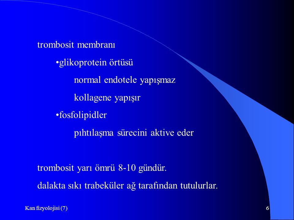 normal endotele yapışmaz kollagene yapışır fosfolipidler