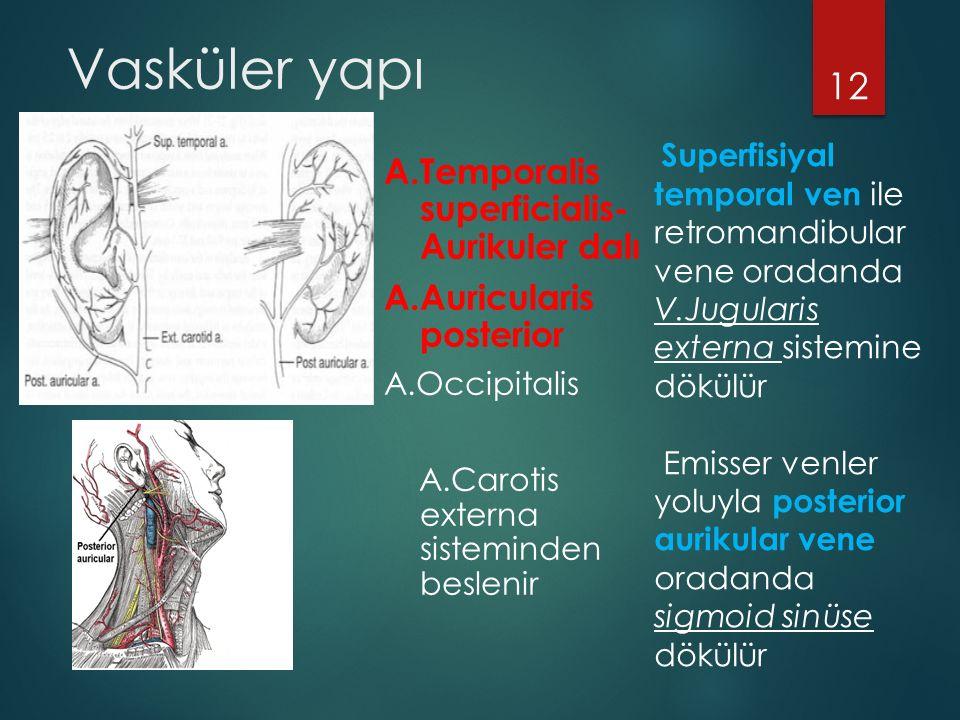 Vasküler yapı A.Temporalis superficialis- Aurikuler dalı