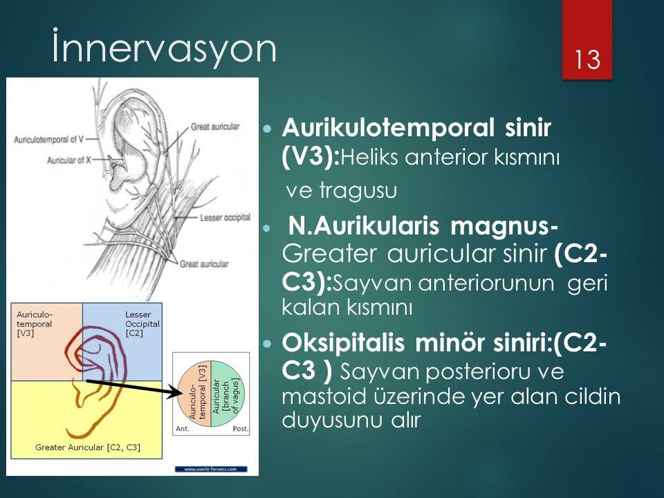 İnnervasyon Aurikulotemporal sinir (V3):Heliks anterior kısmını