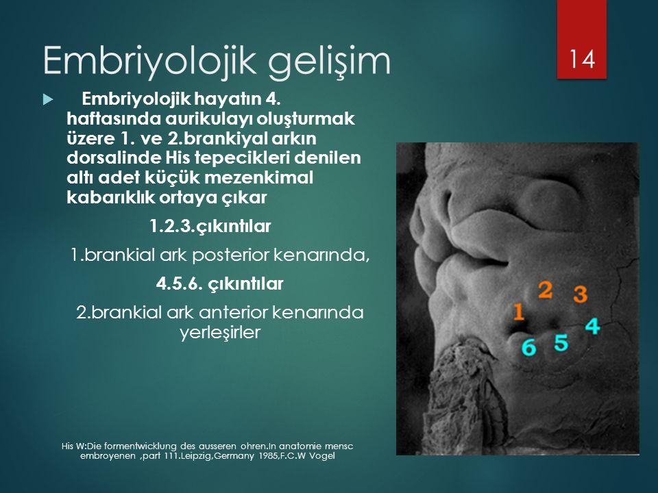 Embriyolojik gelişim