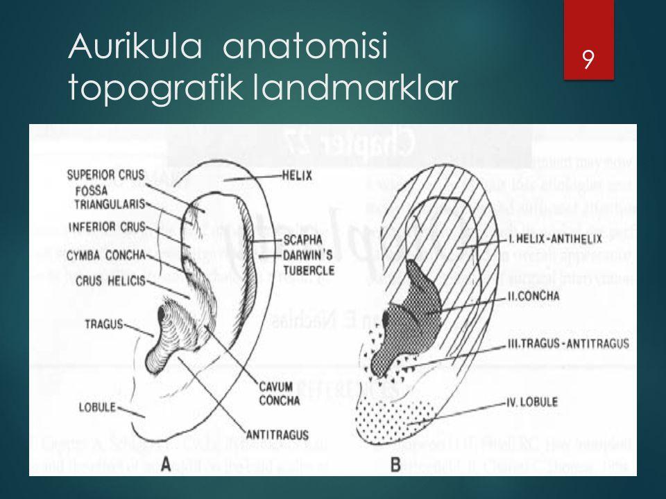 Aurikula anatomisi topografik landmarklar
