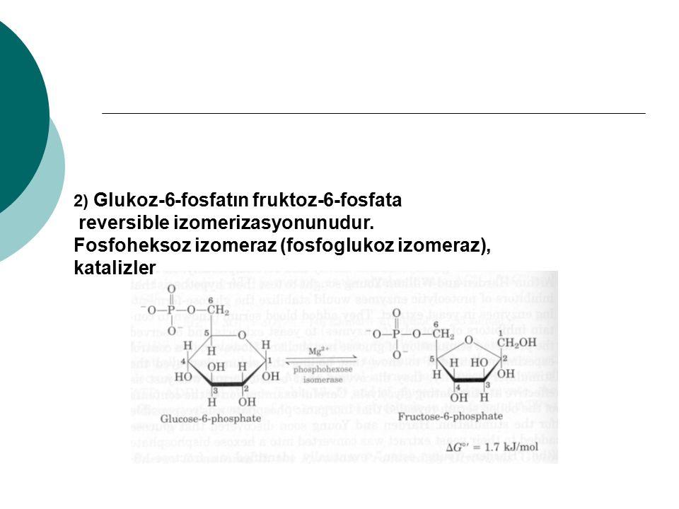 reversible izomerizasyonunudur.