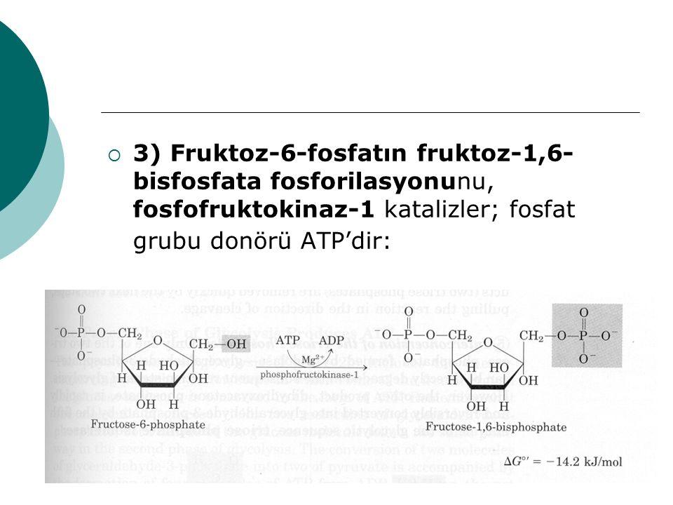 3) Fruktoz-6-fosfatın fruktoz-1,6-bisfosfata fosforilasyonunu, fosfofruktokinaz-1 katalizler; fosfat grubu donörü ATP'dir: