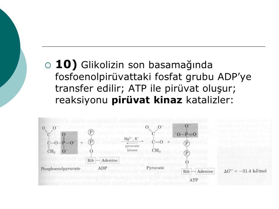 10) Glikolizin son basamağında fosfoenolpirüvattaki fosfat grubu ADP'ye transfer edilir; ATP ile pirüvat oluşur; reaksiyonu pirüvat kinaz katalizler: