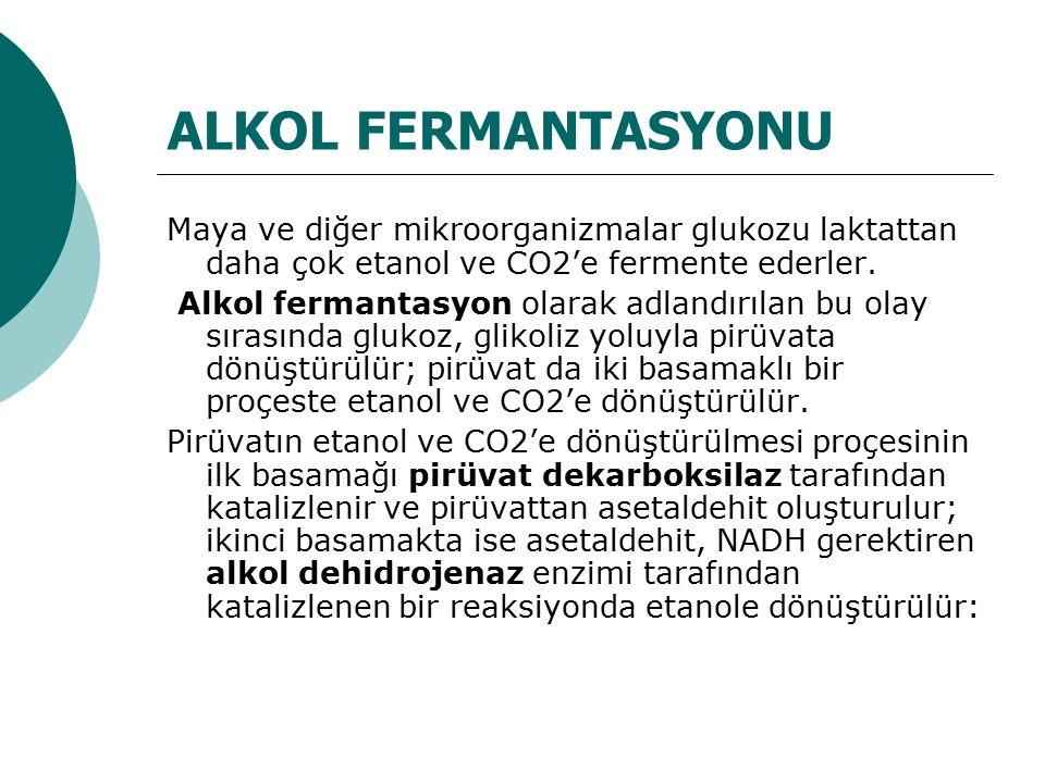 ALKOL FERMANTASYONU Maya ve diğer mikroorganizmalar glukozu laktattan daha çok etanol ve CO2'e fermente ederler.