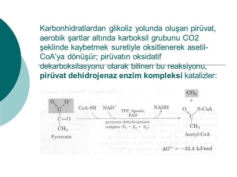 Karbonhidratlardan glikoliz yolunda oluşan pirüvat, aerobik şartlar altında karboksil grubunu CO2 şeklinde kaybetmek suretiyle oksitlenerek asetil-CoA'ya dönüşür; pirüvatın oksidatif dekarboksilasyonu olarak bilinen bu reaksiyonu, pirüvat dehidrojenaz enzim kompleksi katalizler: