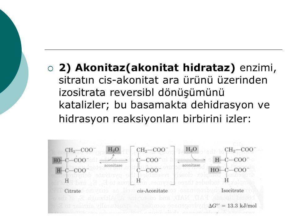 2) Akonitaz(akonitat hidrataz) enzimi, sitratın cis-akonitat ara ürünü üzerinden izositrata reversibl dönüşümünü katalizler; bu basamakta dehidrasyon ve hidrasyon reaksiyonları birbirini izler: