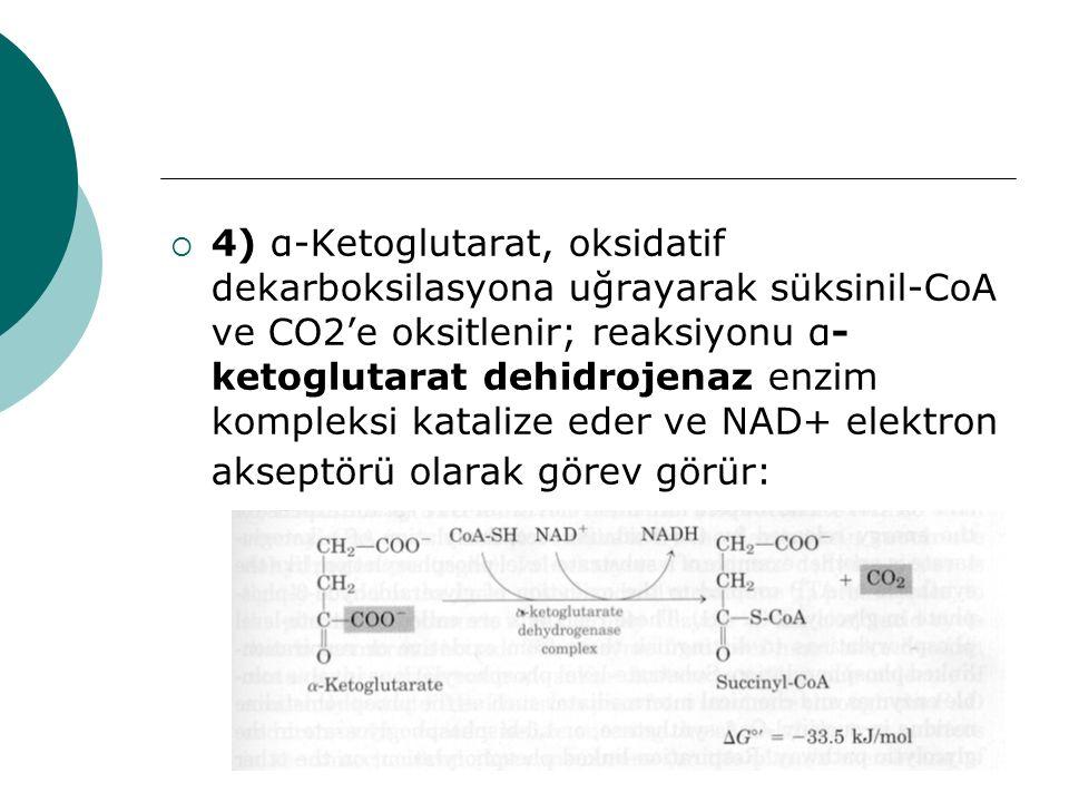 4) α-Ketoglutarat, oksidatif dekarboksilasyona uğrayarak süksinil-CoA ve CO2'e oksitlenir; reaksiyonu α-ketoglutarat dehidrojenaz enzim kompleksi katalize eder ve NAD+ elektron akseptörü olarak görev görür: