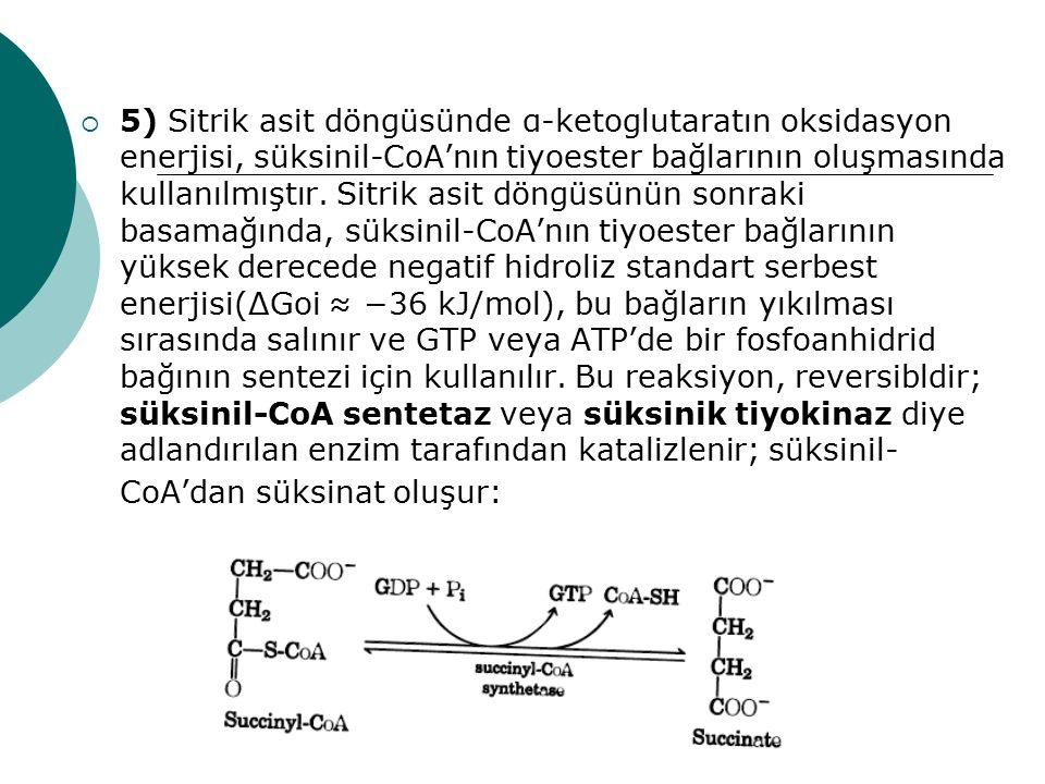 5) Sitrik asit döngüsünde α-ketoglutaratın oksidasyon enerjisi, süksinil-CoA'nın tiyoester bağlarının oluşmasında kullanılmıştır.