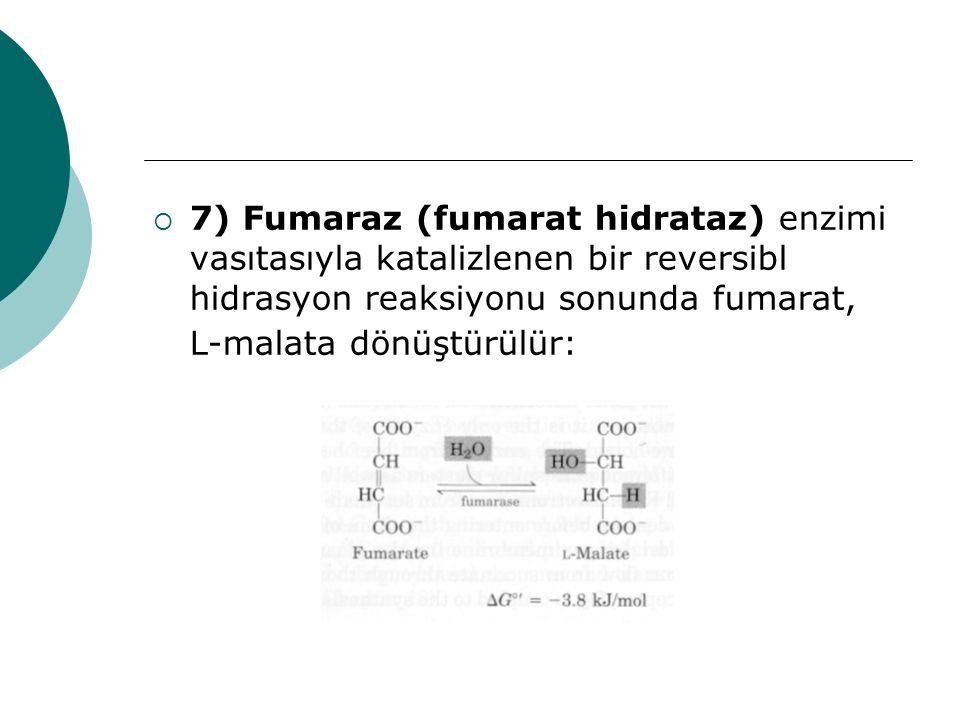 7) Fumaraz (fumarat hidrataz) enzimi vasıtasıyla katalizlenen bir reversibl hidrasyon reaksiyonu sonunda fumarat, L-malata dönüştürülür: