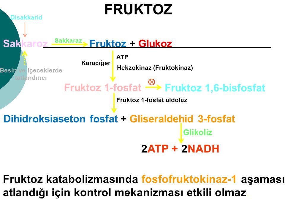 FRUKTOZ Disakkarid. Sakkaroz. Sakkaraz. Fruktoz + Glukoz. ATP. Karaciğer. Hekzokinaz (Fruktokinaz)